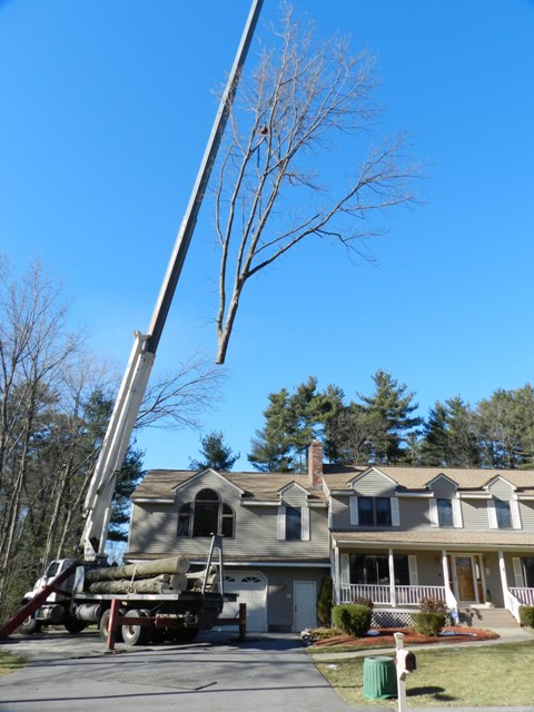 Tree Climbing Jobs   Tree Climber Employment   Woburn