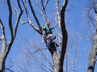 Arbor Care Tree Trimming