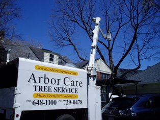 Arbor Care Tree Pruning